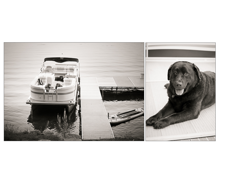 A chocolate labrador dog relaxes on the deck of a boat on a Michigan lake